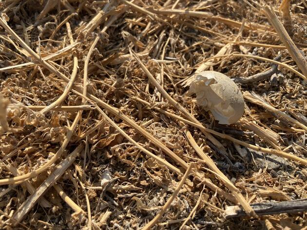Avian Botulism Kills 40,000 Birds at Lower Klamath National Wildlife Refuge