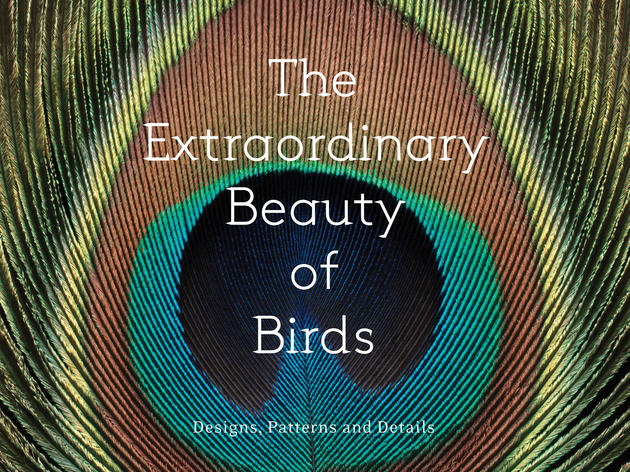 Birds' striking beauty magnified in new photo book