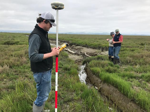 Preparing for the next phase of restoration in Sonoma Creek marsh