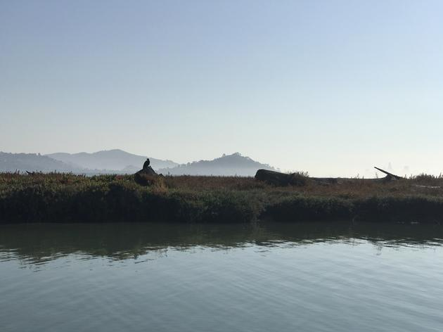 Marin Independent Journal visits restored habitat on Aramburu Island