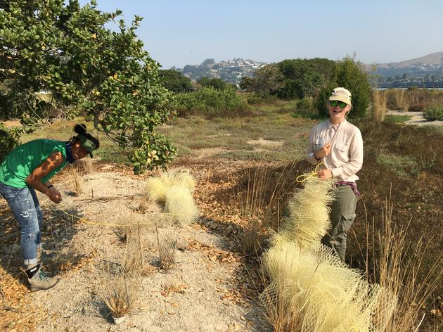 Seasonal Biological Aides at Richardson Bay enhance conservation and engagement work