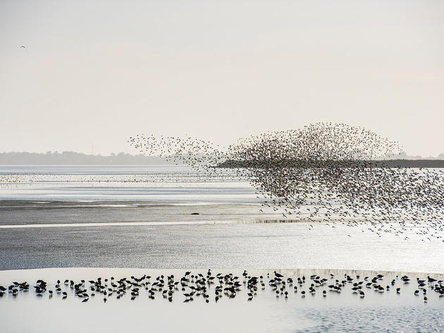 Continuing the fight to save vital bird habitat in Humboldt Bay