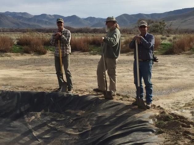 Creating Tricolored Blackbird habitat at Kern River Preserve