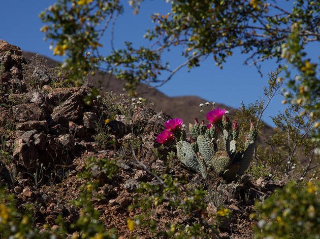 Feds unveil draft plan for desert renewable energy development