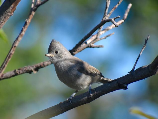 As spring migration winds down, Audubon Starr Ranch still getting great birds