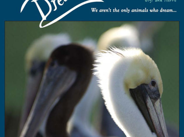 Pelican Dreams on Kickstarter
