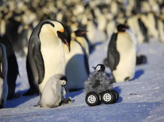 New tool for monitoring wildlife: Rover chicks