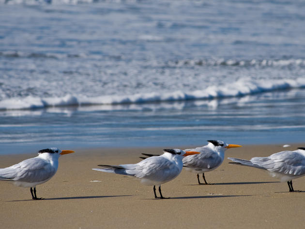Pacific Americas Shorebird Conservation Strategy
