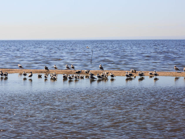 Statement from Audubon California following Assembly Committee hearing on the Salton Sea