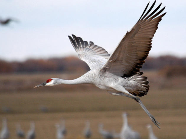 California Assembly passes legislation defending state's birds from federal rollbacks