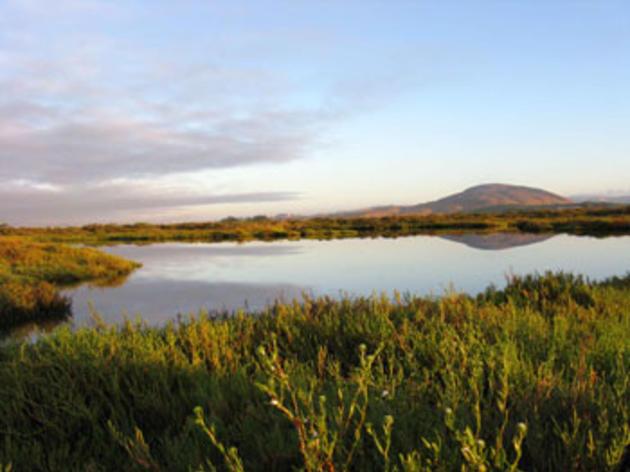 Volunteer opportunity: native plant restoration at the San Pablo Bay National Widllife Refuge