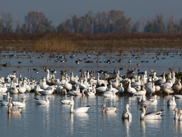 Bill defending California's migratory birds passes key Assembly Committee