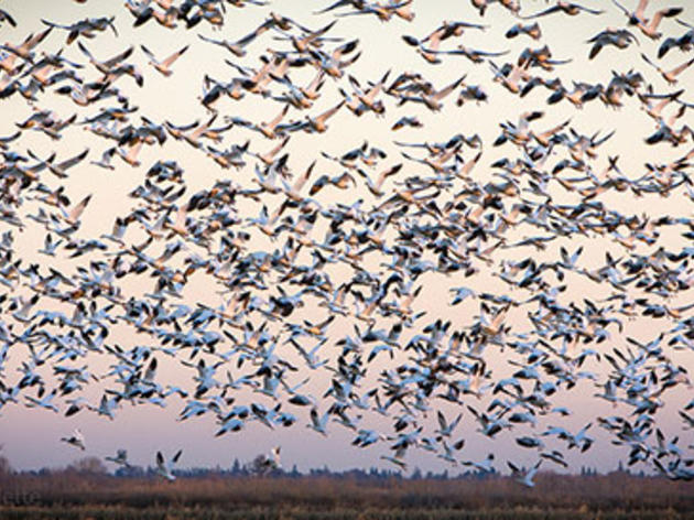 Op-ed: Any water bond should include birds