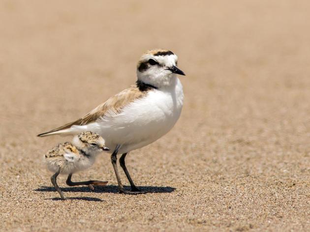 Be a bird-friendly beachgoer this summer