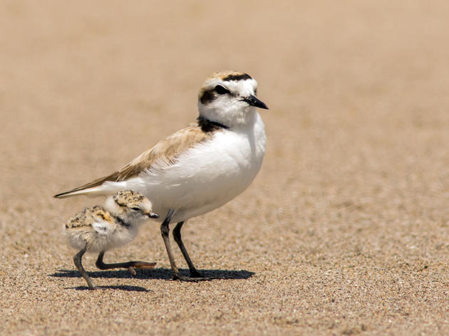 Be a bird-friendly beachgoer this summer