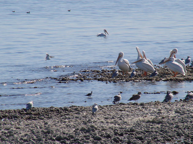 Salton Sea's evolving flows
