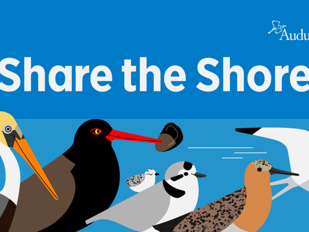 10 Steps to Share the Shore