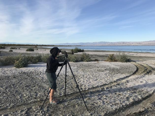 The ever-changing birds at the Salton Sea