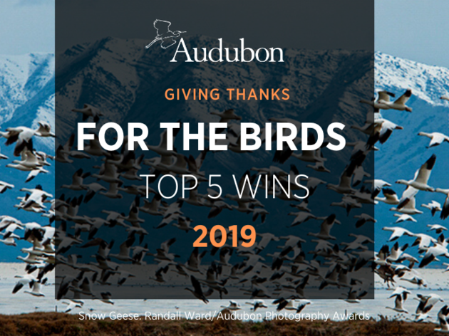 Top 5 Wins for Birds in 2019