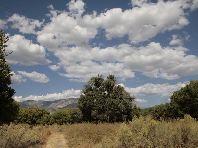 California Important Bird Areas GIS Data and Methods