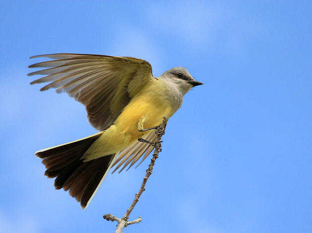 Bill to protect California's migratory birds advances