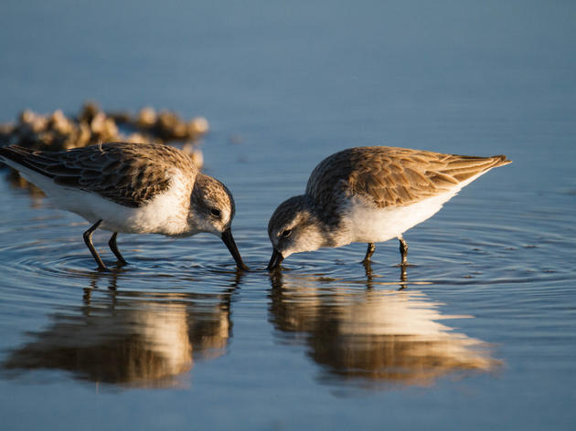 Audubon California's message to Salton Sea policymakers: Don't blow it