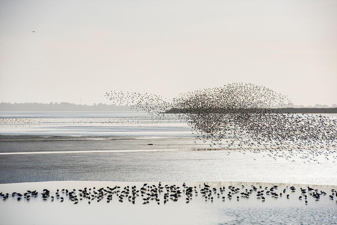 Seabirds and Marine