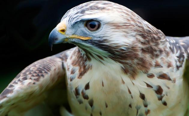 13 Bird Superstitions | Audubon California