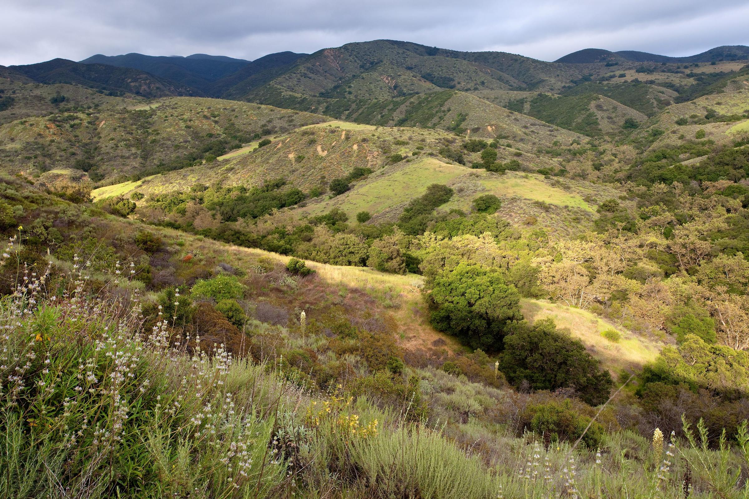The Audubon Starr Ranch is an amazing example of wild Southern California.