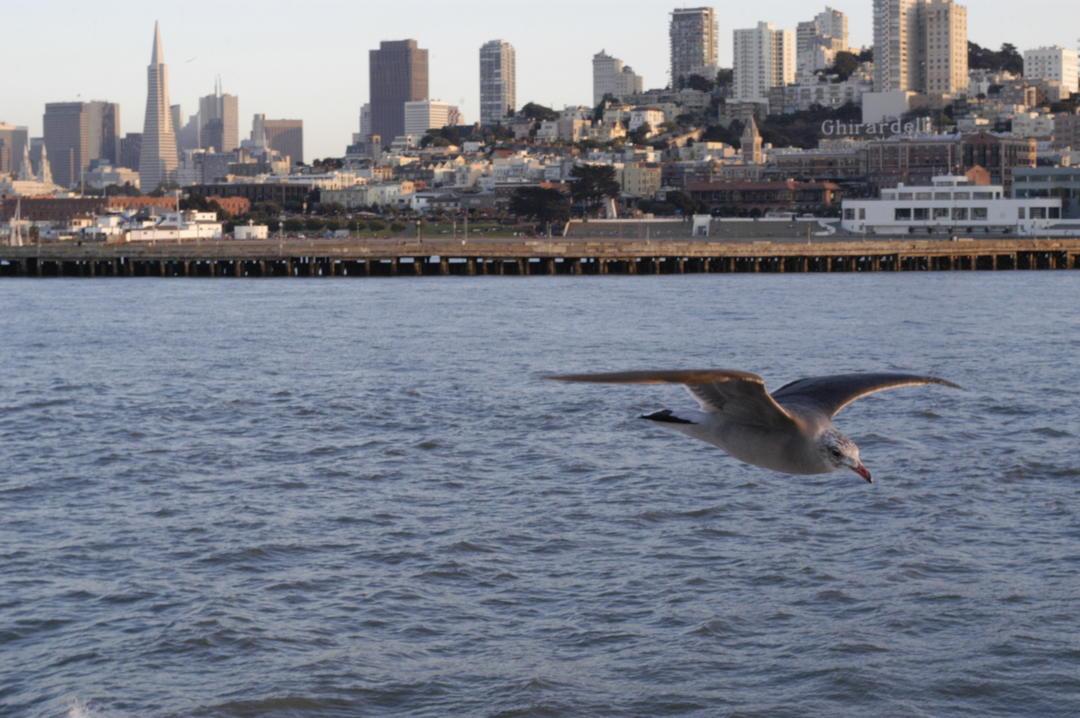san francisco bay ballot measure would restore vital bird