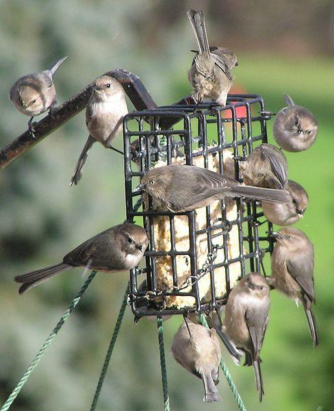 Attract Birds To Your Backyard This Winter