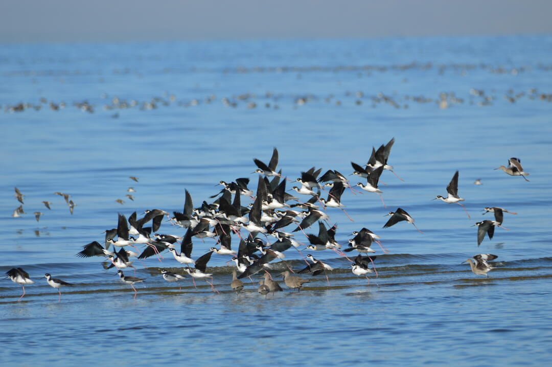 Valley Voice: The Salton Sea, long a disaster, is on the brink of a major collapse
